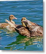 Muscovy Family Metal Print