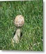 Mushroom 01 Metal Print