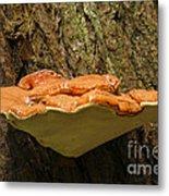 Mushroom Plate Metal Print