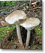 Mushroom Twins - All Grown Up Metal Print