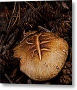 Mushrooms And Pine Combs   #3659 Metal Print