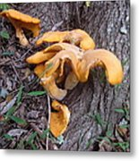 Mushrooms Gone Wild Metal Print
