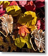 Mushrooms In Fall Leaves Metal Print