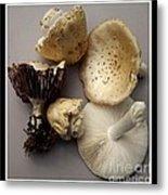 Mushrooms With Watercolor Effect 5 Metal Print