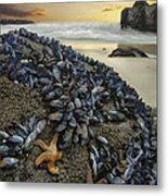 Mussel Beach Metal Print