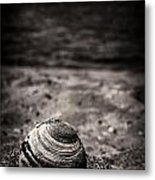 Mussel On The Beach Metal Print
