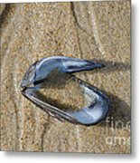 Mussel Shell On The Beach Metal Print