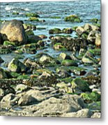 Mussels And Moss Metal Print