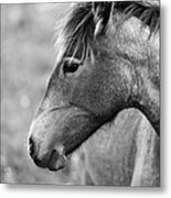 Mustang Close 1 Bw Metal Print by Roger Snyder