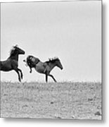 Mustangs Sparring 1 Metal Print by Roger Snyder