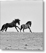 Mustangs Sparring 3 Metal Print