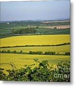 Mustard Colour Fields Metal Print