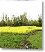 Mustard Fields In Kashmir On The Way To The Town Of Sonamarg Metal Print