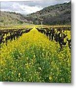 Mustard In The Vineyard Metal Print