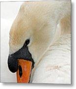 Mute Swan Fine Art Photograph Metal Print