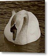 Mute Swan - In Sepia Metal Print