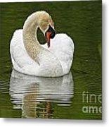 Mute Swan Pictures 191 Metal Print