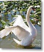 Mute Swan Wings Metal Print