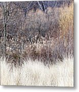 Muted Colors Of Winter Forest Metal Print
