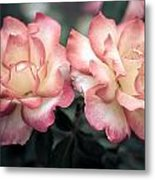 Muted Pink Roses Metal Print