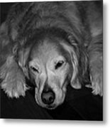 My Aged Buddy Metal Print