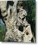 My Best Olive Tree Friend  Home Privat Spain Since 1999 Metal Print