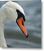 My Best Side Metal Print by Thomas Fouch
