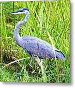 My Blue Heron Metal Print by Greg Fortier