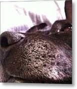 My Dog Bud Metal Print