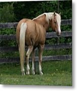 My Dream Horse Metal Print
