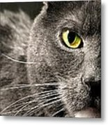 My Eye's On You Metal Print