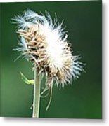 My Face To The Wind Metal Print