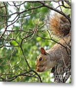 My First American Squirrel Metal Print
