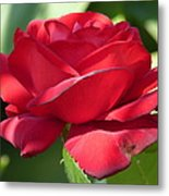 My First Rose Metal Print by Janina  Suuronen