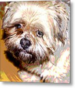 My Friend Lhasa Apso Metal Print