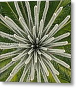 My Giant Sago Palm Metal Print
