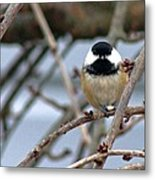 My Lil Chickadee Metal Print by Rhonda Humphreys