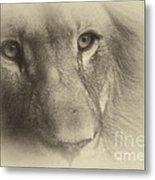 My Lion Eyes In Antique Metal Print