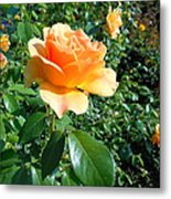 My Love Is Like A Rose Metal Print