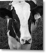 My Name Is Cow - Black And White Metal Print