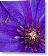 My Old Clematis Home Metal Print