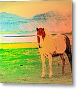 An Old Icelandic Mare, What Is Going On Inside Of Her  Metal Print