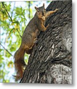 My Peanut Metal Print by Robert Bales