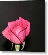 My Rose Metal Print