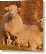 My Sheep ...   Metal Print