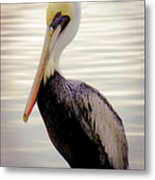 My Visitor Metal Print