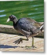 My What Big Feet You Have Metal Print