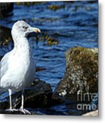 Mystic Seagull Metal Print