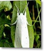 Mystic White Moth Metal Print by Bobbie Urbanczyk