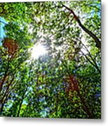 Mystical Forest Sky Metal Print